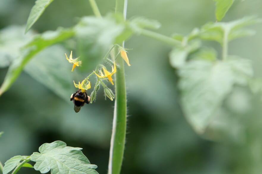 Bee pollinating plant.